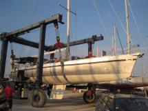 AYC - Levrier des mers 16m